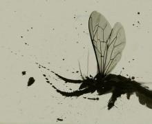Fly από τον Sugahtank Γιάννη Ρουμπάνη